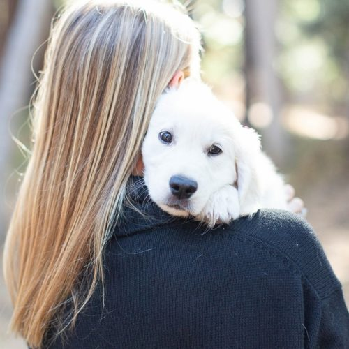 Anniversary Session With A Golden Retriever Puppy