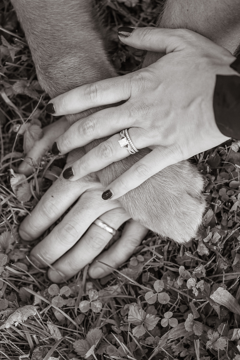 paw and hands, rings detail shot | ©Alice G Patterson Photography