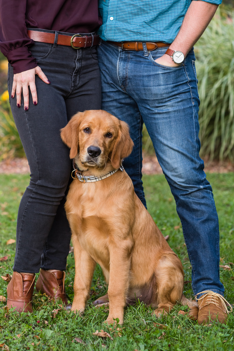 ©Alice G Patterson Photography - Syracuse dog photography, Golden Retriever