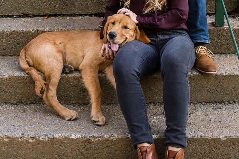 silly dog, Golden Retriever with head on woman's lap, ©Alice G Patterson Photography, Syracuse, NY