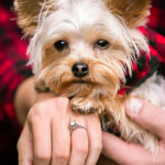 Engaging Tails:  Tucker the Yorkie | Clayton, GA