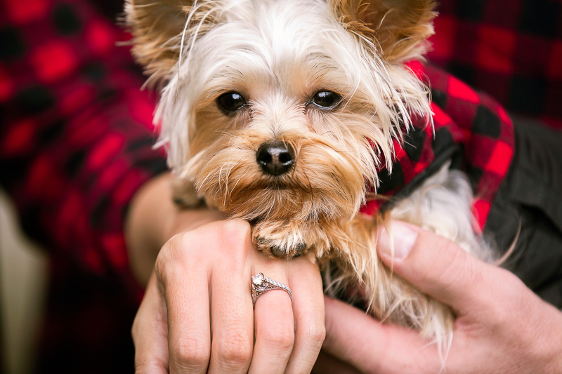engagement photos with a Yorkie, fall engagement photos | ©Cariad Photography, Clayton, GA