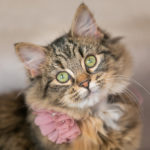 In Home Cat Photography Session | Chanhassen, MN