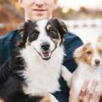 Happy Tails:  Remy and Rye the Mini Australian Shepherds