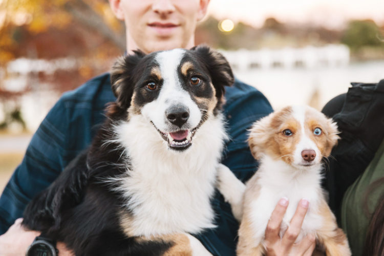 lifestyle dog photography, Miniature Australian Shepherds | ©Monkia Normand Photography