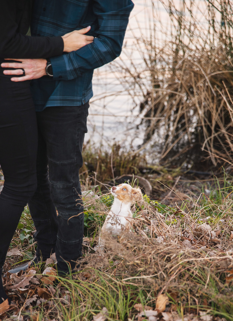 little puppy looking up at humans, Northern Texas family portraits, ©Monika Normand Photography