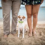 Engaging Tails:  Marley | Kapolei, Hawaii
