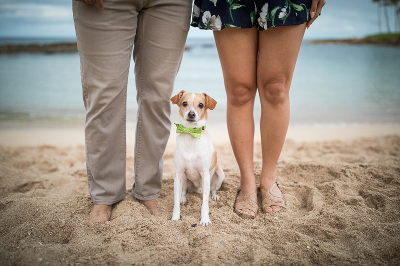 cute mixed breed wearing green bow tie on beach, ©VIVIDfotos, Hawaiian engagement session