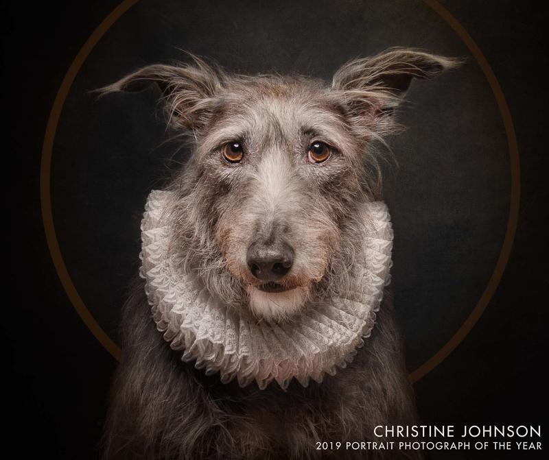 "dog wearing ruffled lace ""Shakespearean"" collar, Christine Johnson 2019 Portrait Photograph of the year"