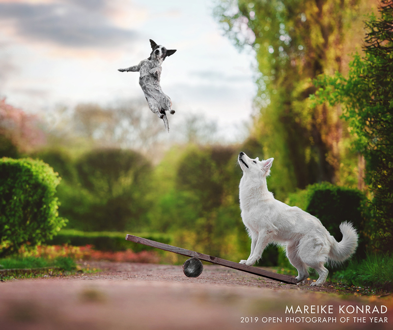photoshopped image of dog flying into the air | Mareike Konrad | International Pet Photographer Of the Year Open Category Winner 2019