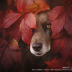 International Pet Photographer of the Year Contest | 2020