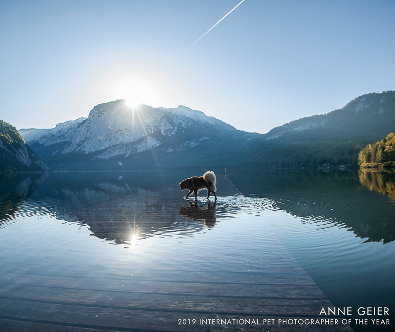 dog in water with snow capped mountain in background, ©Anne Geier, lifestyle dog photography