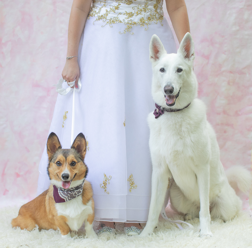 dogs at weddings, wedding attire for dogs | ©K Schulz Photography,