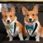 Best (Wedding) Dogs:  Wedding Attire for Dogs