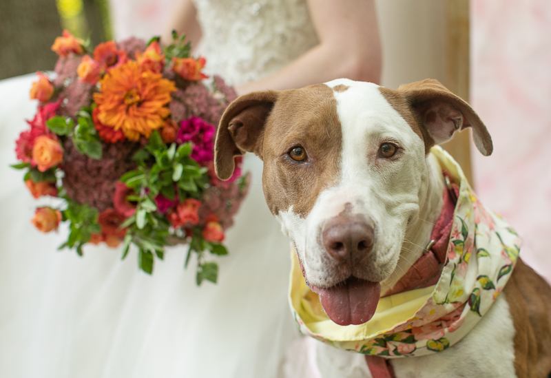 bride holding flowers next to her dog, dog wearing scarf for wedding | ©K Schulz Photography, Minnesota pet and wedding photography