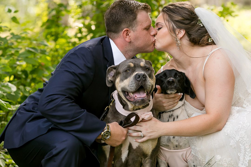 bride and groom kissing, Cane Corso mix and Pointer mix between them, | ©Jeannine Marie Photography,