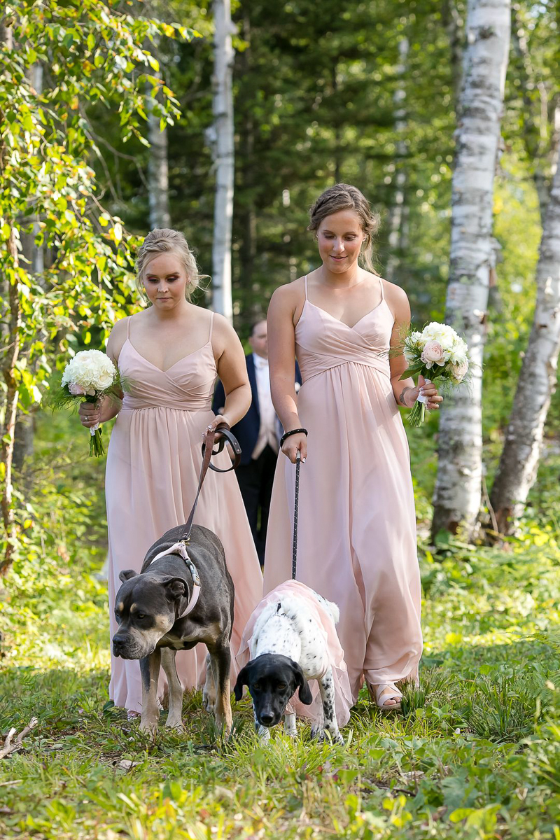 bridesmaids in blush dressing walking wedding dogs , dog-friendly wedding, ©Jeannine Marie Photography, Duluth, MN