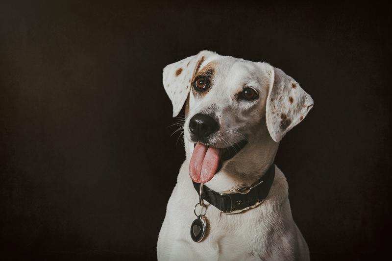adorable white dog with spots against black background, studio dog portrait ideas | ©Trademark Photos by Tami McKenney, Sapulpa, Oklahoma