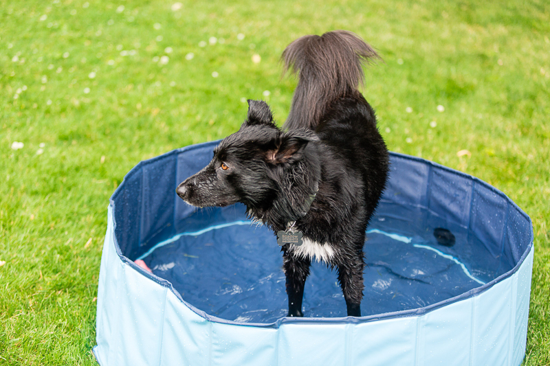 mixed breed dog in small pool ©Casey Fatchett Photography | on location pet photography
