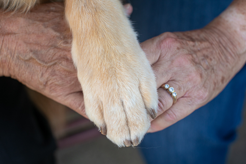 dog's paw and humans hands, lifestyle pet and family photos | ©K Schulz Photography