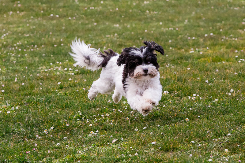 dog running through the grass, Magnuson Park, Seattle, WA | ©M Laine Photography