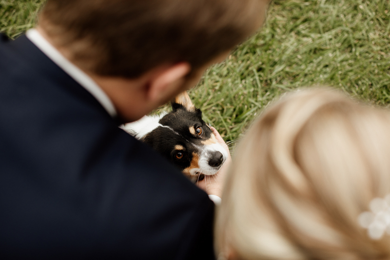 wedding dog photography ideas, cute pup looking up at bride and groom | © McKenzie Bigliazzi Photography