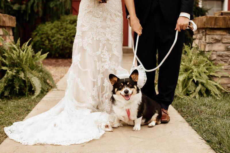 Corgi, wedding dog, © McKenzie Bigliazzi Photography, Wright City, MO