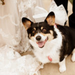 Best (Wedding) Dog:  Sadie May the Corgi