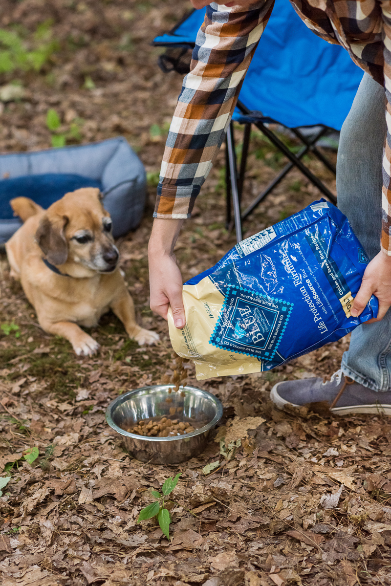 dog waiting for BLUE Life Protection Formula™| Daily Dog Tag dog food review