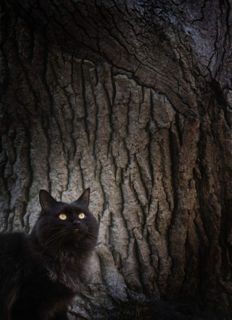 long haired black cat in front of tree, Chasing Shadows, Chantal Levesque Photography | Montreal cat portraits