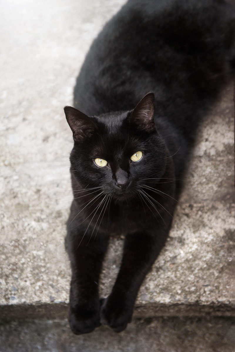 handsome black cat on concrete landing, Chantal Levesque Photography | Montreal cat photographer