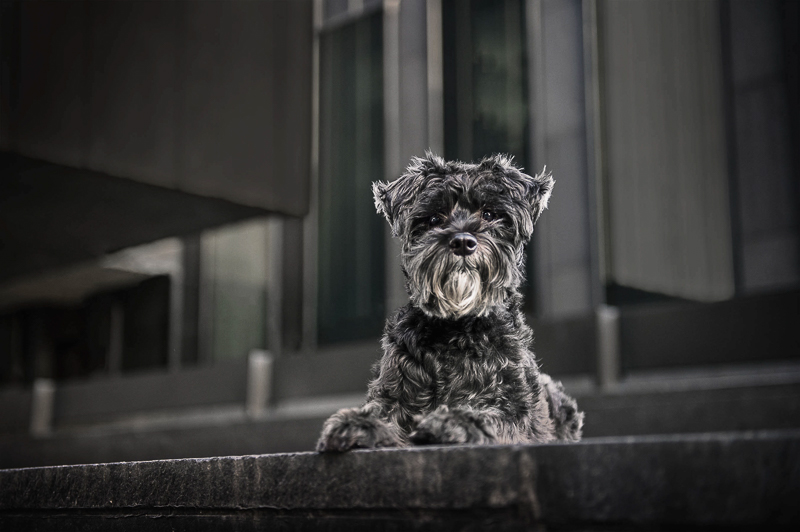 black dog on steps in front of modern building, Chantal Levesque Photography | Montreal dog photographer