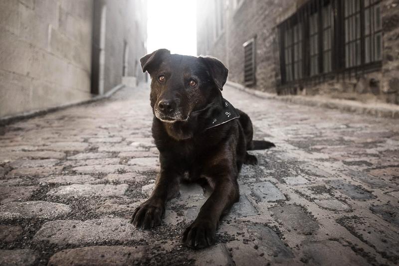 Chasing Shadows, black dog on brick road, Chantal Levesque Photography | Montreal dog photographer