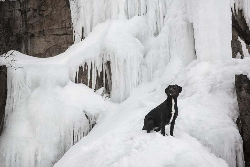black mixed breed dog sitting on ice covered rocks | Chantal Levesque Photography, winter dog portraits