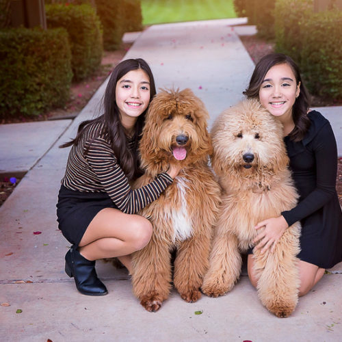 Happy Tails:  Family Photos with  Goldendoodles