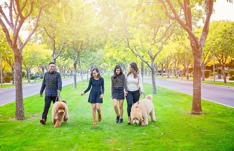 family walking their dogs, ©Laura Gordillo Photography | dog-friendly family portraits, Phoenix, AZ