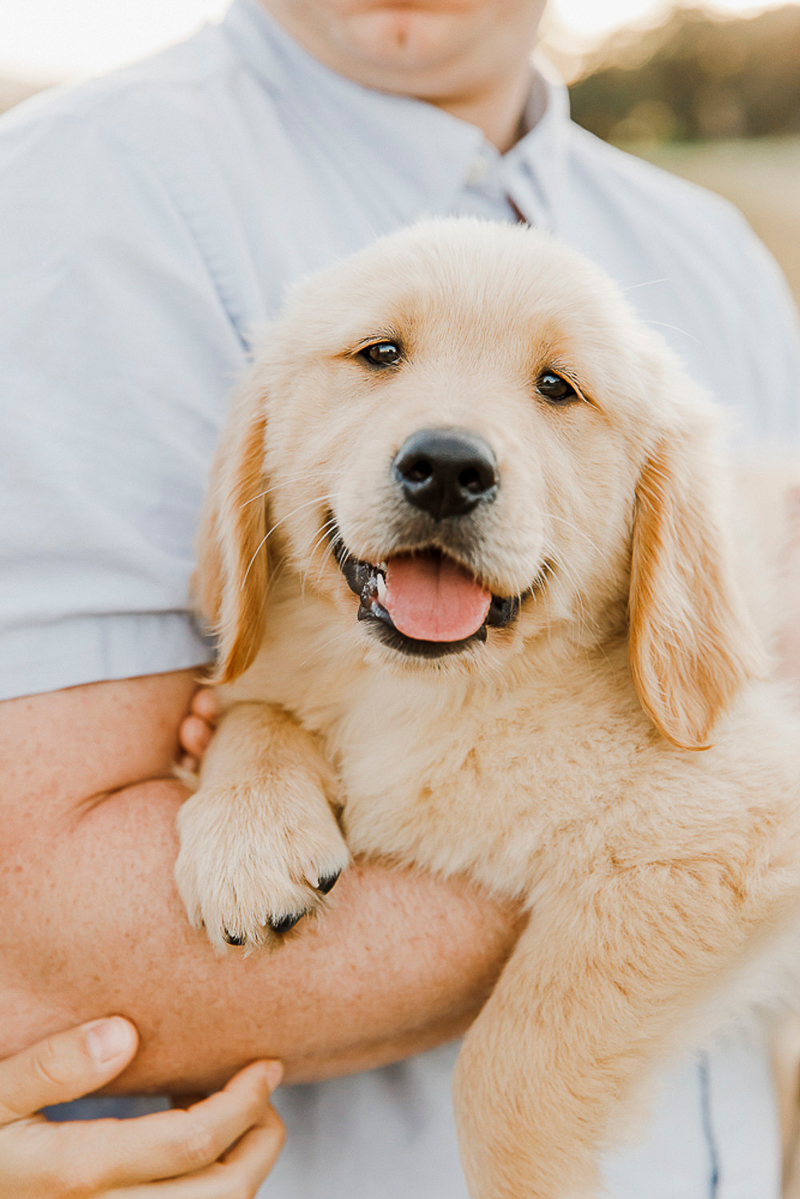 cute Golden Retriever puppy, lifestyle dog photography | ©Paulina Perrucci Photography