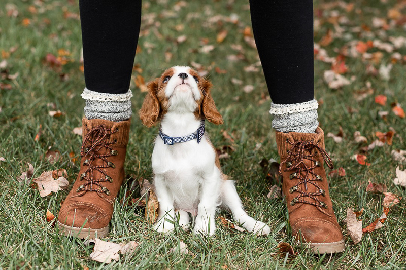 King Charles Cavalier puppy looking up at woman | Heather O'Steen Photography, Baltimore pet photography
