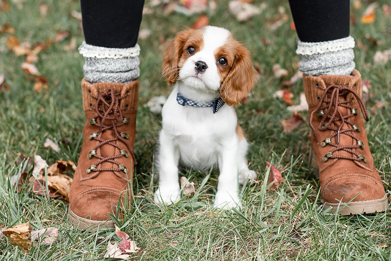 adorable puppy sitting in between girl's feet | Heather O'Steen Photography | pet photographer in the Baltimore area