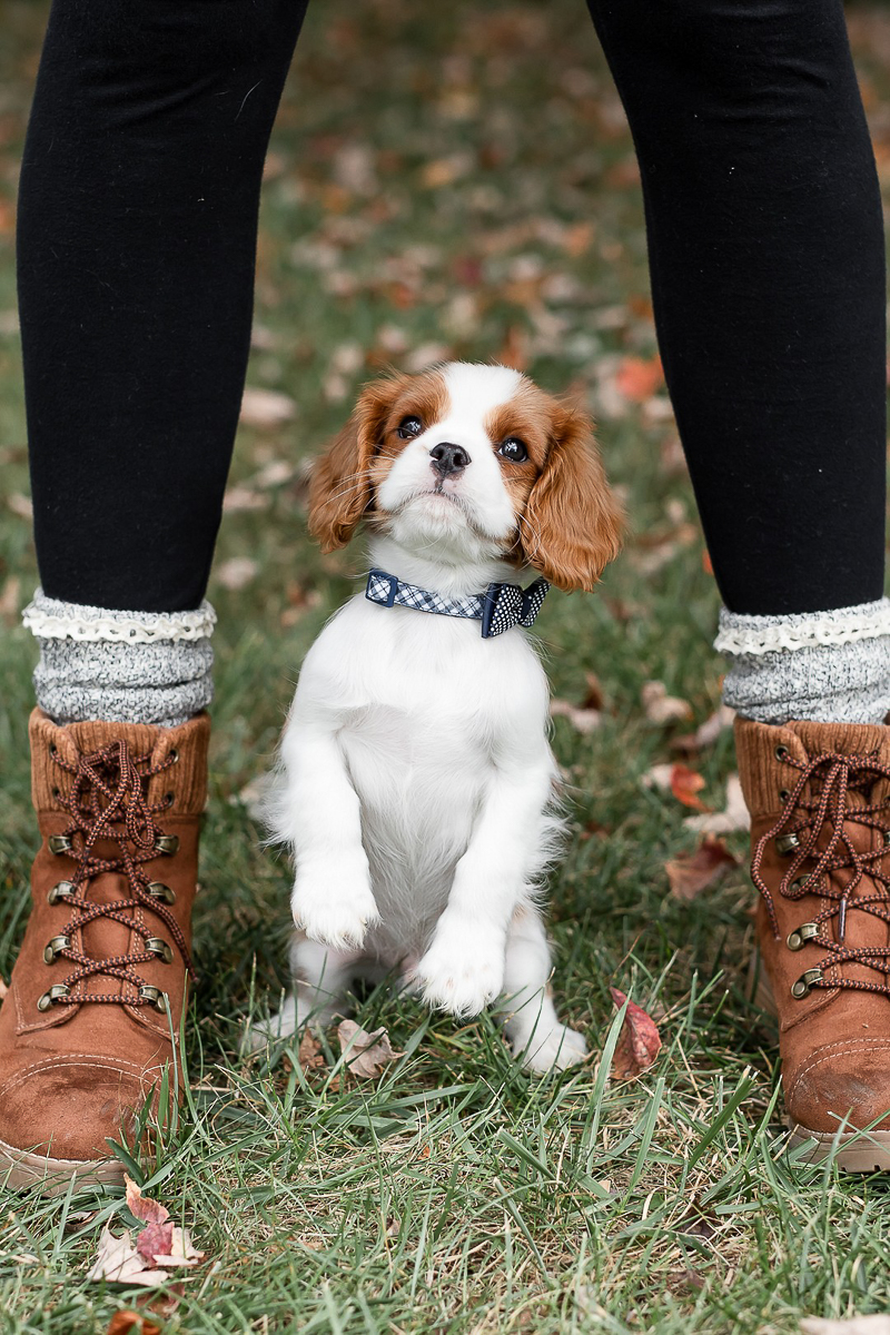 cute puppy wearing bow tie standing in between girl's legs | pet photography ideas, Heather O'Steen Photography, on location pet portraits