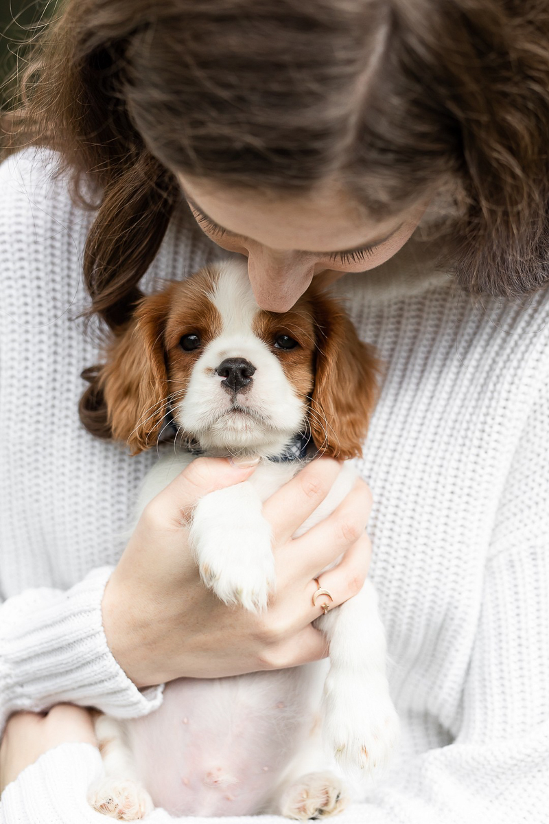 Lifestyle pet and people portraits, King Charles Cavalier Spaniel puppy| Heather O'Steen Photography | on location Baltimore photography