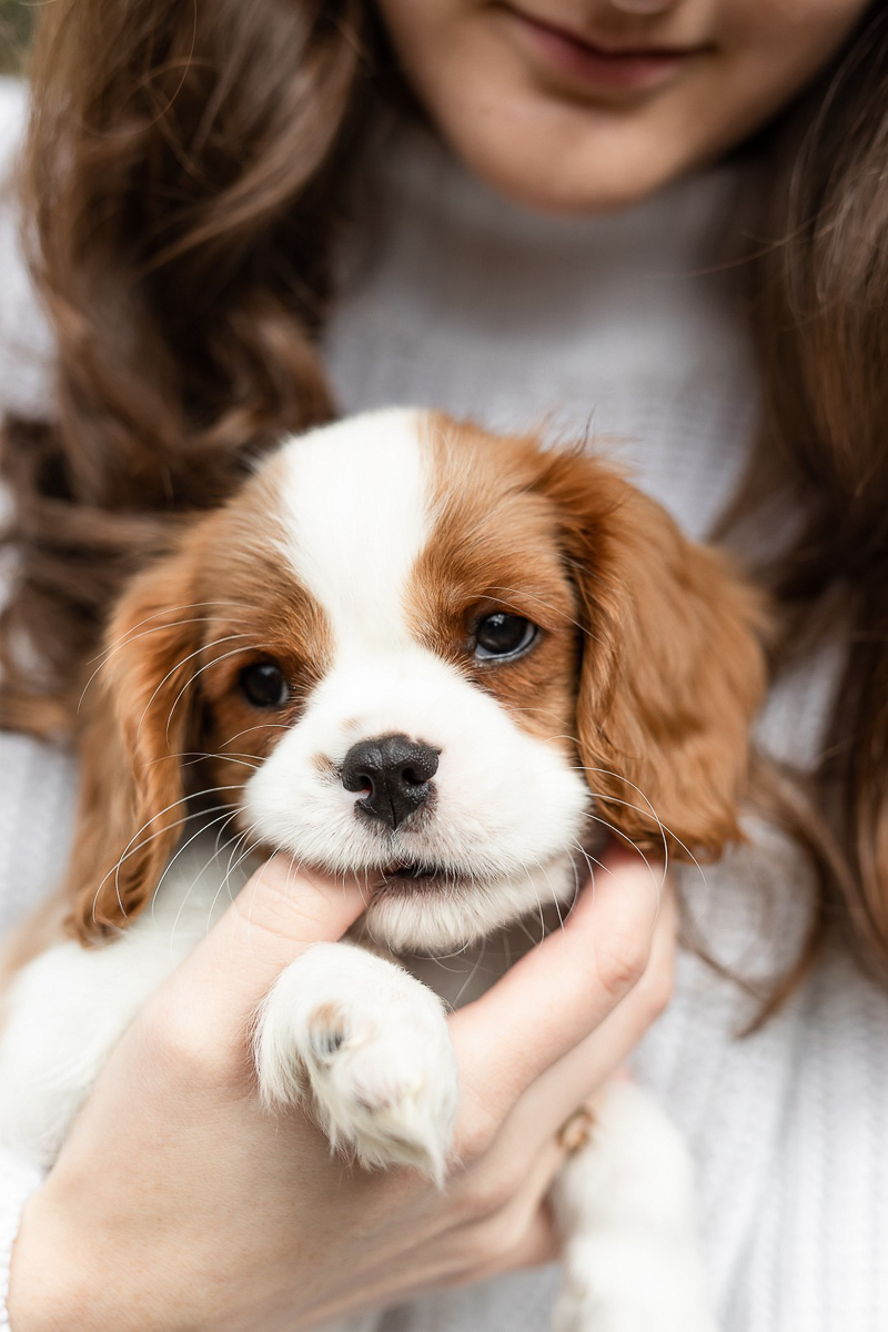 cute puppy chewing on woman's finger, Heather O'Steen Photography, Baltimore lifestyle photography