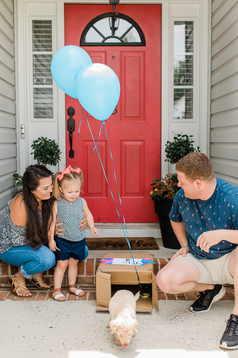 puppy walking out of box with blue balloons, puppy reveal | ©Brandy Morrison Photography, Lexington, SC