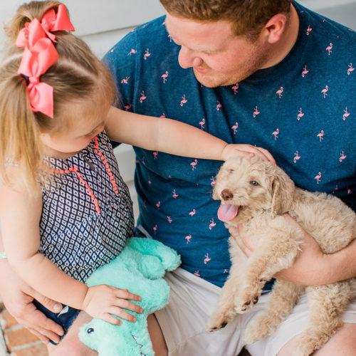 Puppy Love:  Beau the Golden Doodle | Lexington, SC