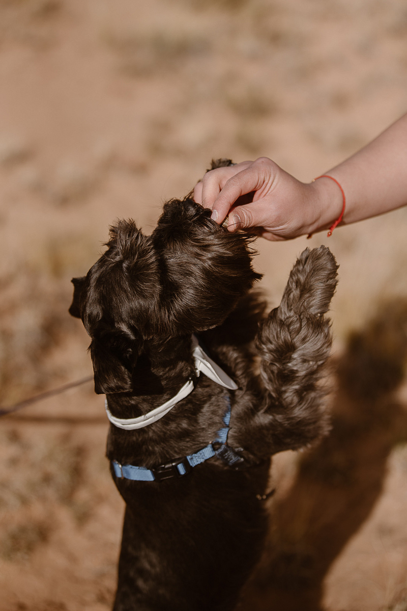 Mini Schnauzer wearing white bow tie getting a treat | © Adventure Instead dog-friendly elopement photography