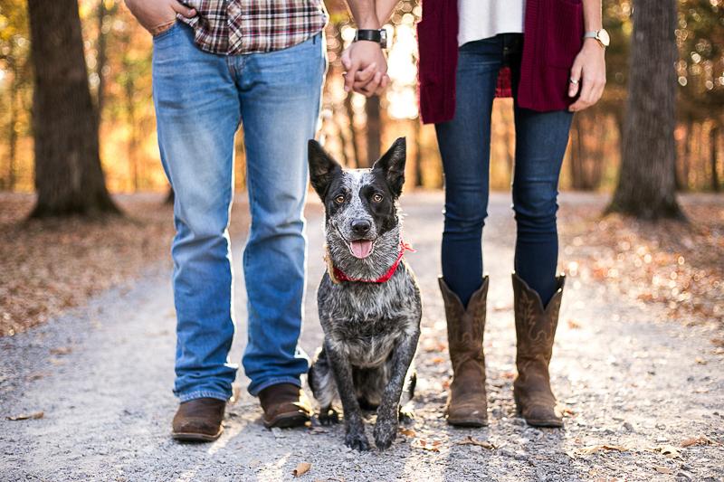 cattledog, dog-friendly engagement tips | ©K Schulz Photography