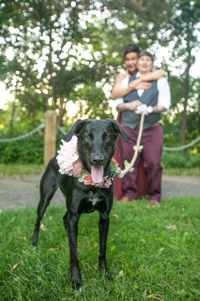 ©K Schulz Photography- dog-friendly engagement tips, black lab mix wearing floral collar, same sex engagement photos