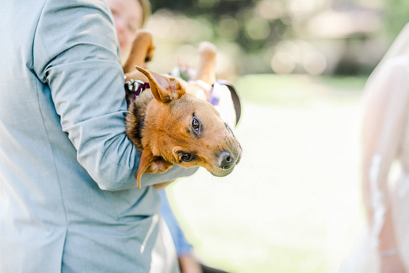 groom carrying Lab/Boxer mix | ©Shelby Chante' Photography