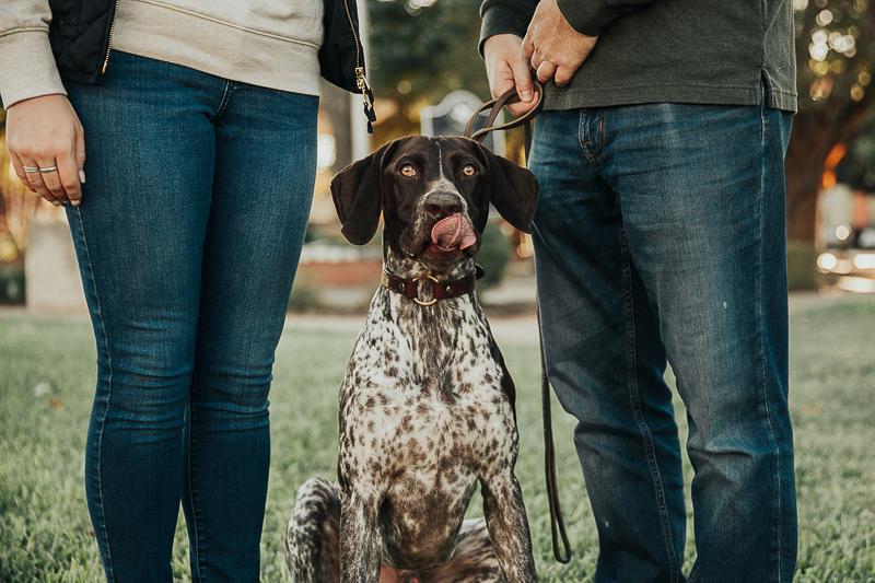 dog sticking tongue out, ©Joshua and Parisa | Austin Wedding Photographer and Videographer
