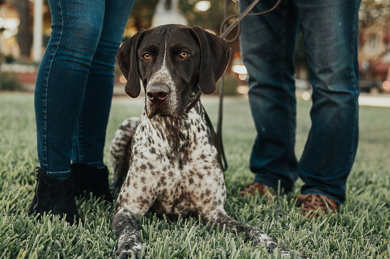 handsome dog lying in the grass, pet-friendly engagement photos | Joshua and Parisa | Austin Wedding Photographer and Videographer